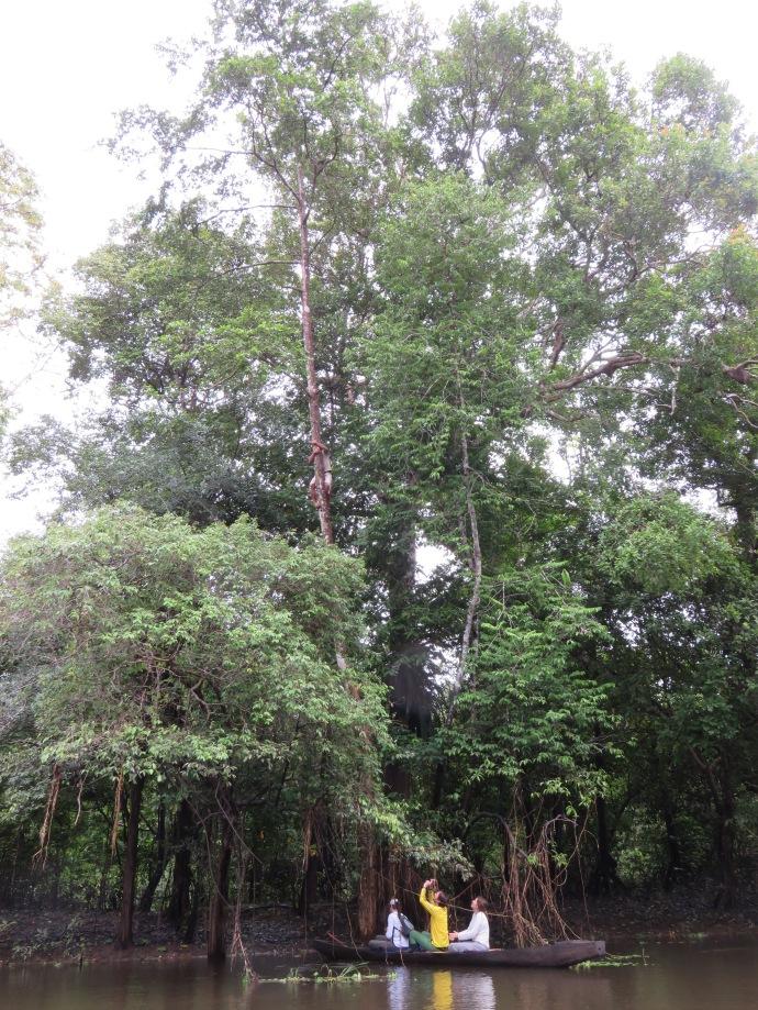 Le paresseux est tout en haut de ce grand arbre